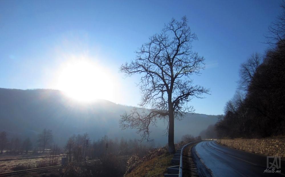 pomul meu 2013_12